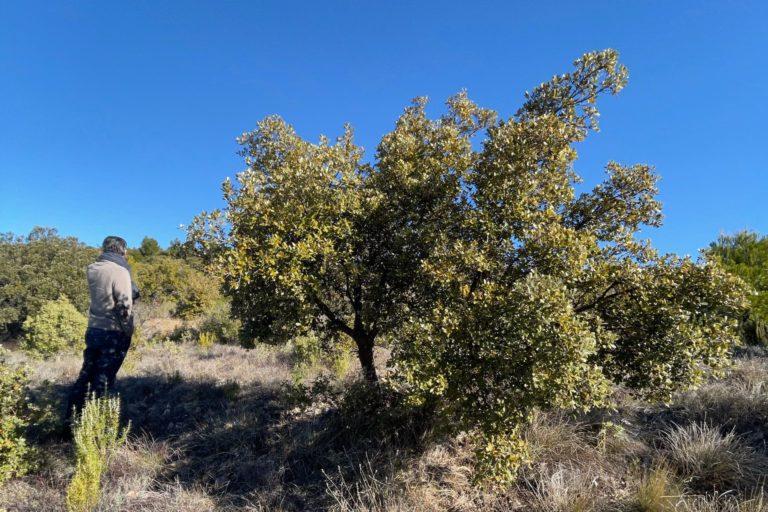 paysage de truffière